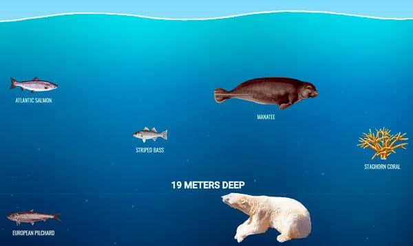 19 metros de profundidad