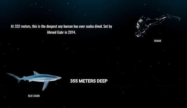 355 metros de profundidad